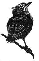 Koloniens logo